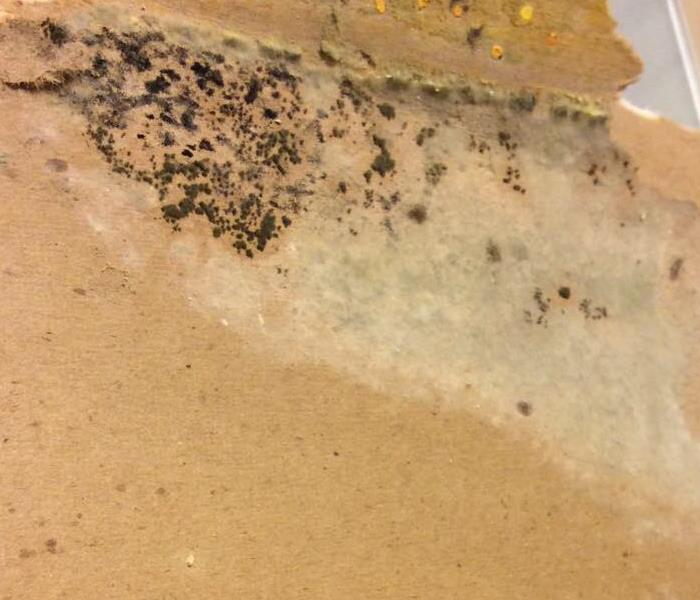 Mold In Home Before