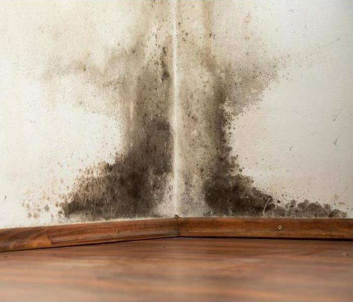 Mold damage affecting the walls of a home